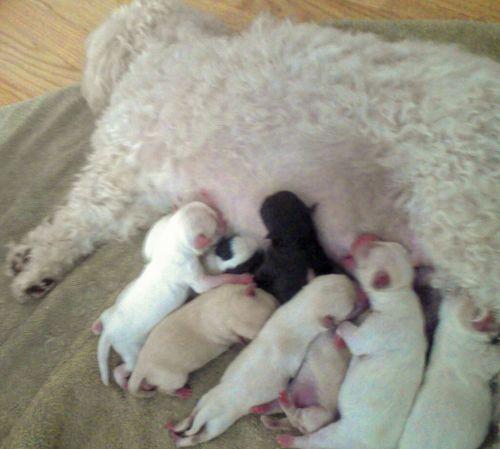 PuppiesNursing051109